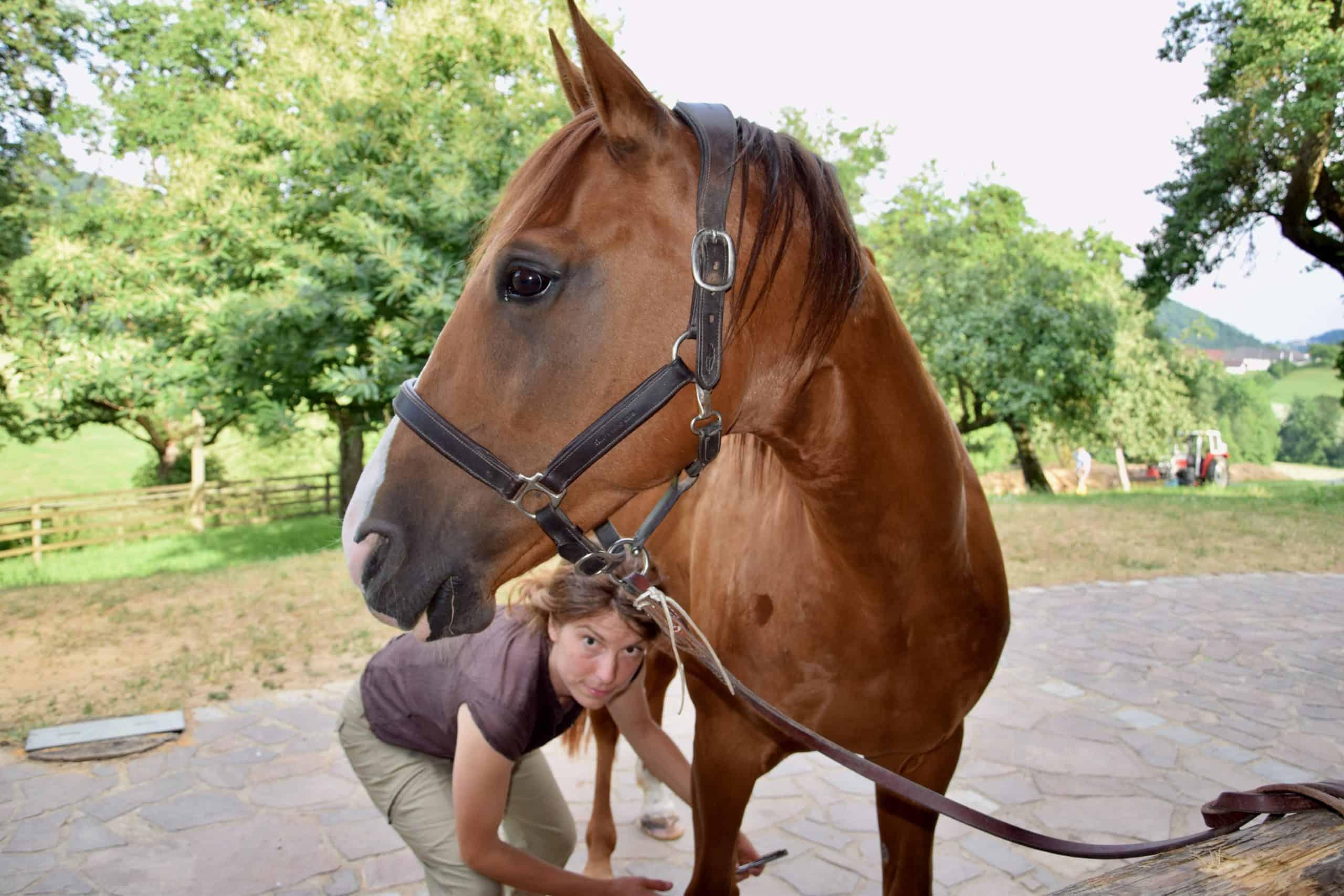 Dr. Ann-Kristin Baum bietet Pferde-Akupunktur mit dem Soft-Laser an.