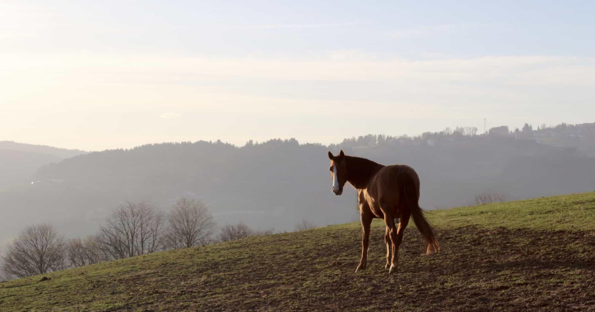 Ganzheitliche Pferdebetrachtung Dr. Ann-Kristin Baum